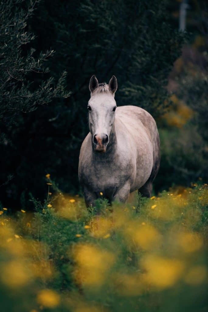 Le cheval est en bonne santé et heureux dans le pré